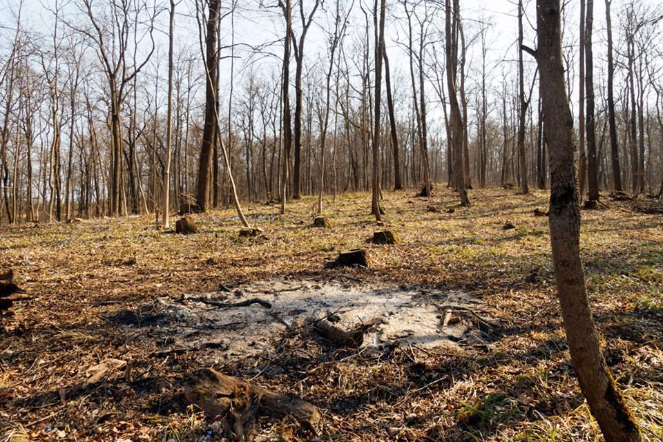 Одні пеньки: харків'яни в шоці від варварської вирубки лісопарку