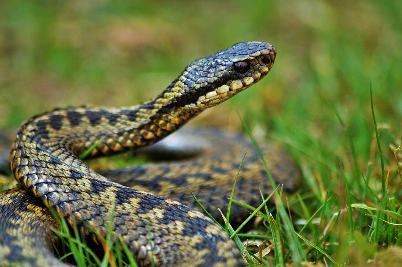 Опасные животные в городе: что делать, если встретил змею, паука или клеща