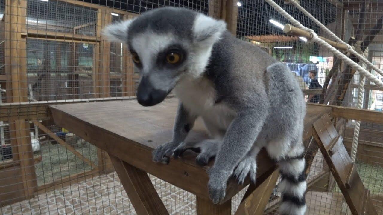 Контактные зоопарки: отдых в аду для животных