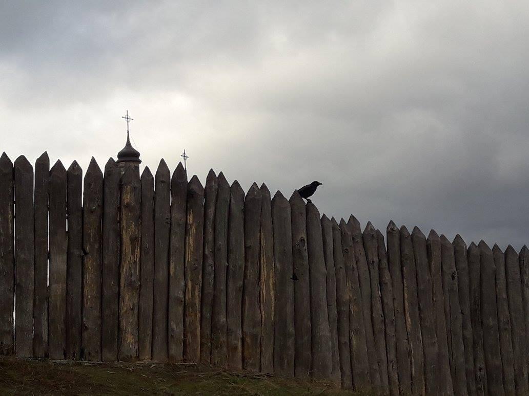 Кошка-чиновник и ворона-сексистка: самые странные животные Украины