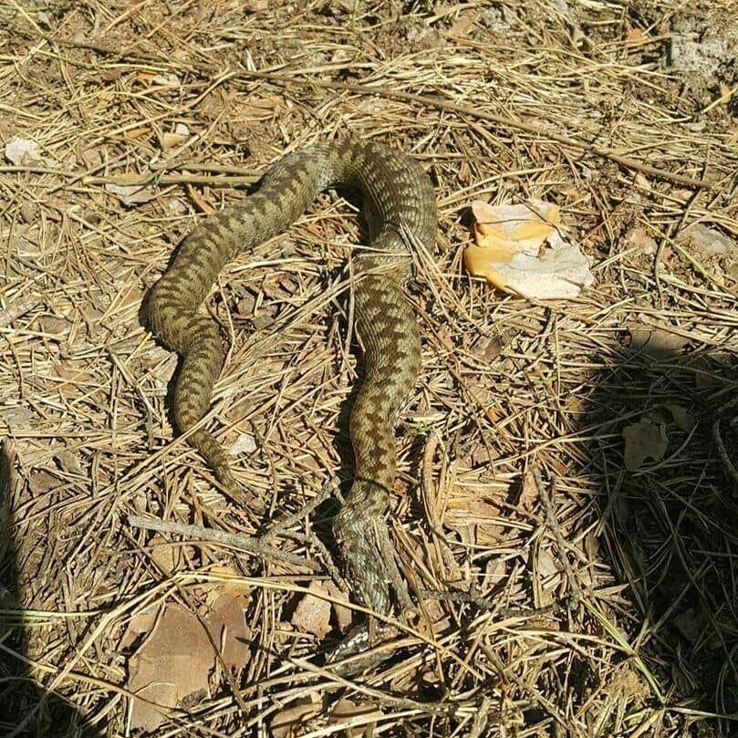 Во Львовской области змея напала на мужчину