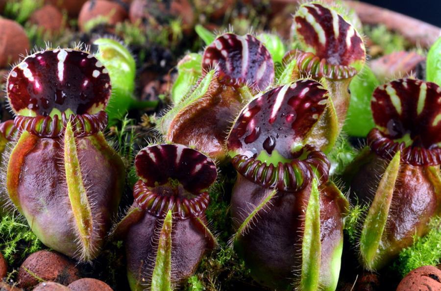 Одесситов приглашают посмотреть на хищные растения