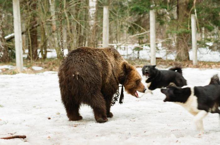 Українська зірка розповіла про знущання над тваринами