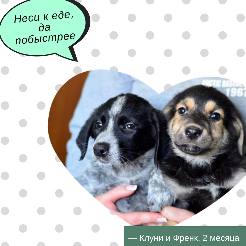 Есть друг: 9 котов и собак Киева, которые ищут дом
