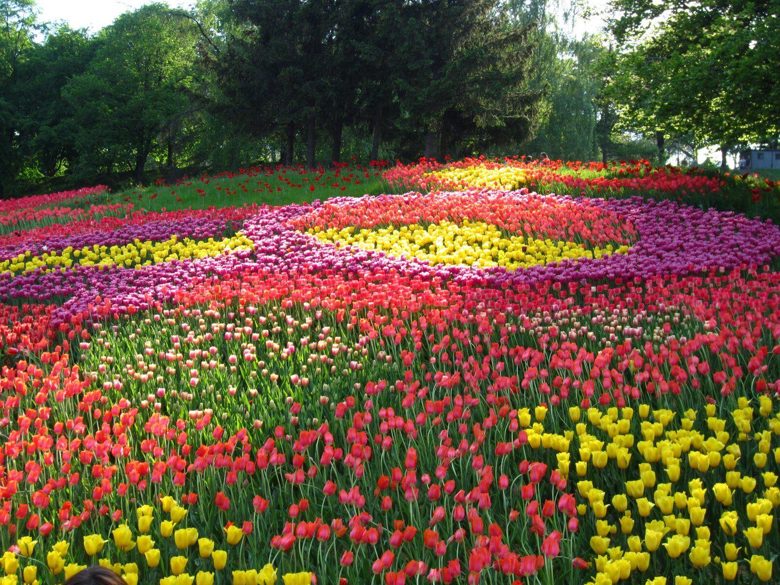 Выставка тюльпанов в Киеве, 27.04-27.05