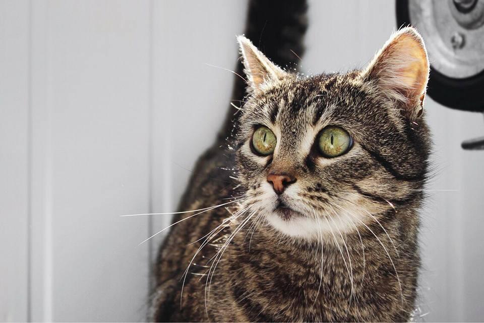 Друг недели: 5 котов Днепра, которые ищут дом