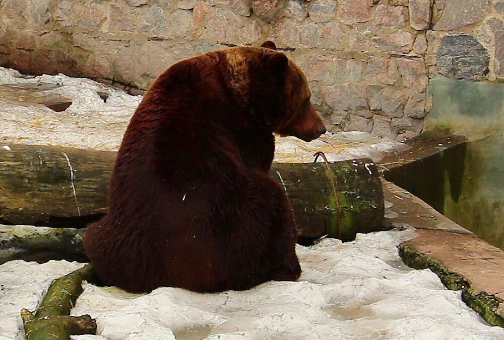 Харьковский зоопарк показал проснувшихся медведей
