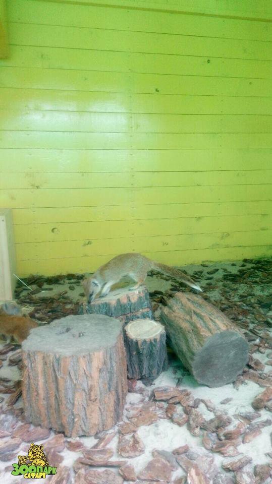 В Бердянске поселилась пара замечательных мангустов