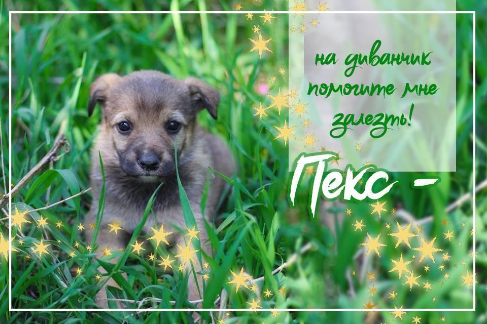 Девять щенков Киева, которым нужен дом