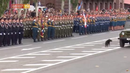 """""""Рать"""" ДНР """"- в шоці"""": на парад проник Хунтік"""