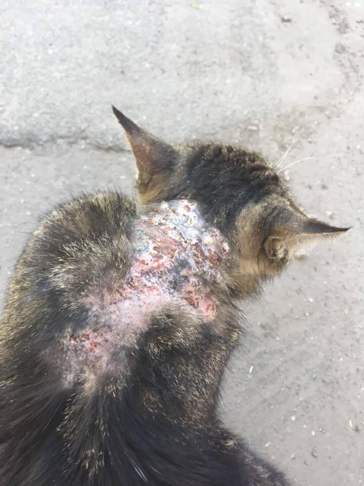 У Києві шкуродер підпалив кота: моторошні фото