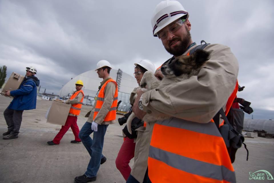 З Чорнобиля в США вивезуть 200 бездомних цуценят