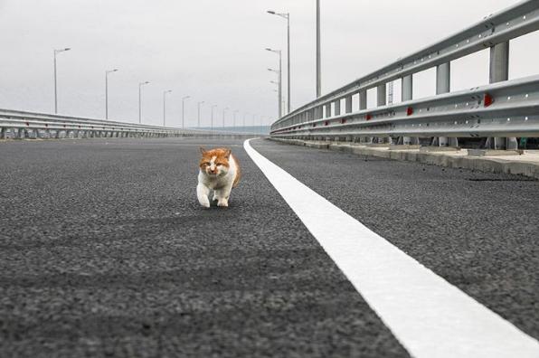 Оккупанты показали первого ступившего на Крымский мост