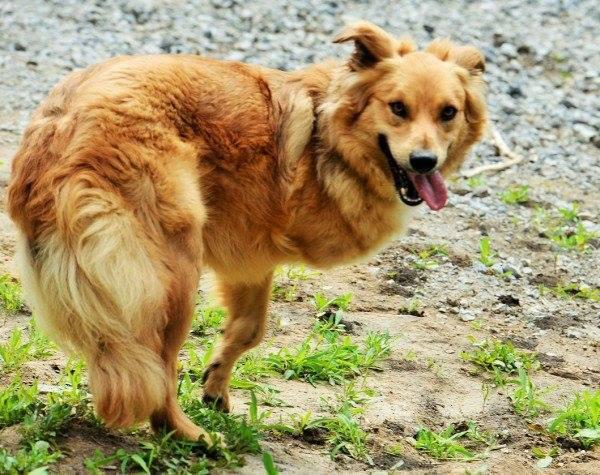 4 собаки Днепра, которые ищут дом