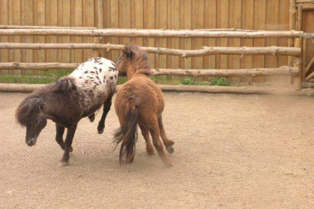 Зоопарк Бердянска похвалился экзотическими питомцами: фото