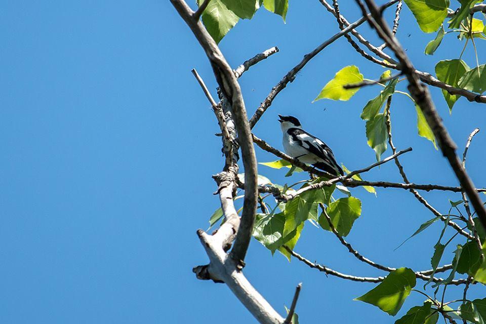 Запорожец показал редких птиц Хортицы