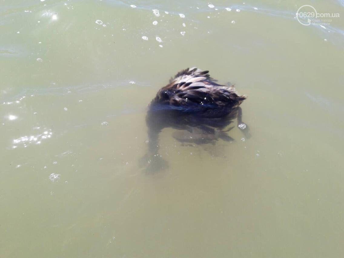 На побережье Азовского моря заметили десятки мертвых птиц
