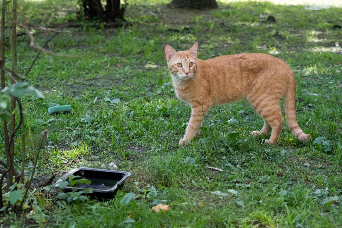 Влаштували полювання: у Києві масово вбивають котів
