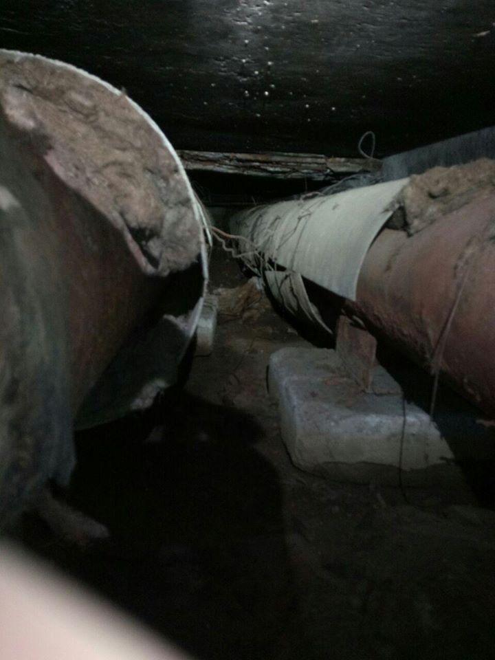 Лиса устроила переполох в депо Киева
