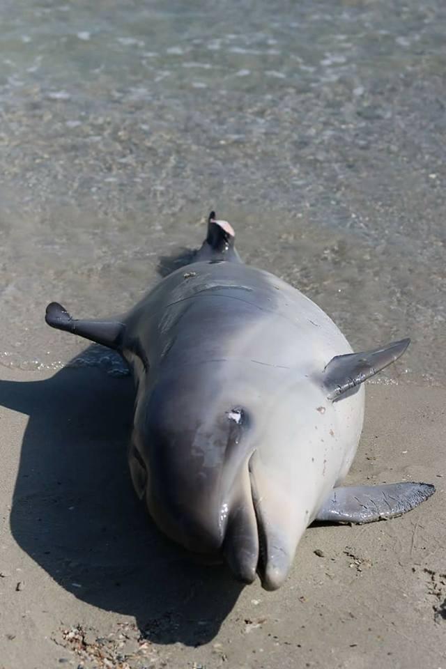На Одещині на березі знайшли мертвого дельфіна