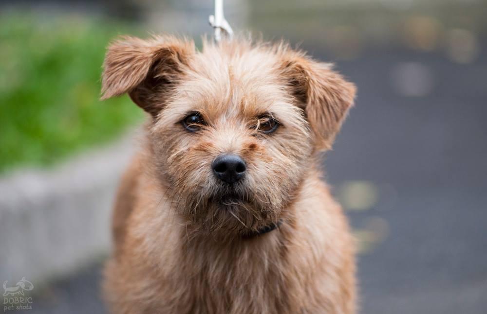 Друг недели: 4 собаки Днепра, которые ищут дом