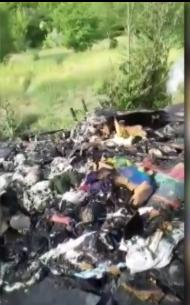 В Запорожье сожгли щенков: волонтеры привлекли полицию