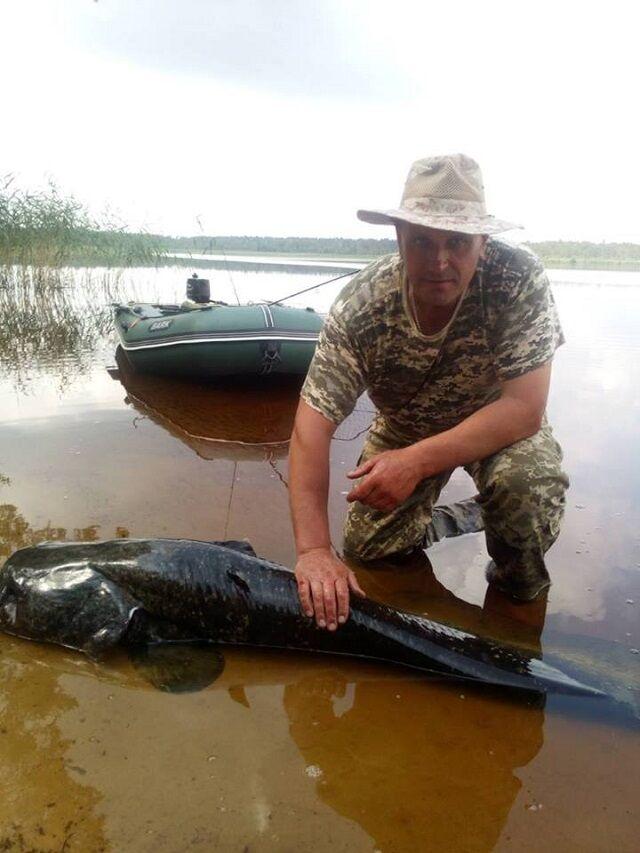 Український рибалка зловив сома-велетня: фото диво-риби