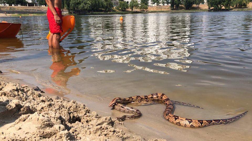 Киевлян испугали гигантские змеи на пляже