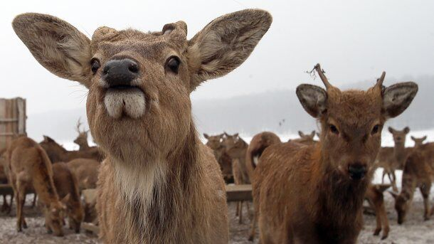 Від оленя до ведмедя: де подивитися на диких тварин в Україні