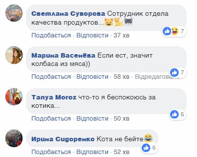 """Киевлян поразило видео кота, """"взломавшего"""" супермаркет"""