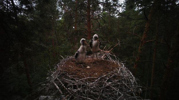 Уникальное явление: в Украину вернулась редкая птица