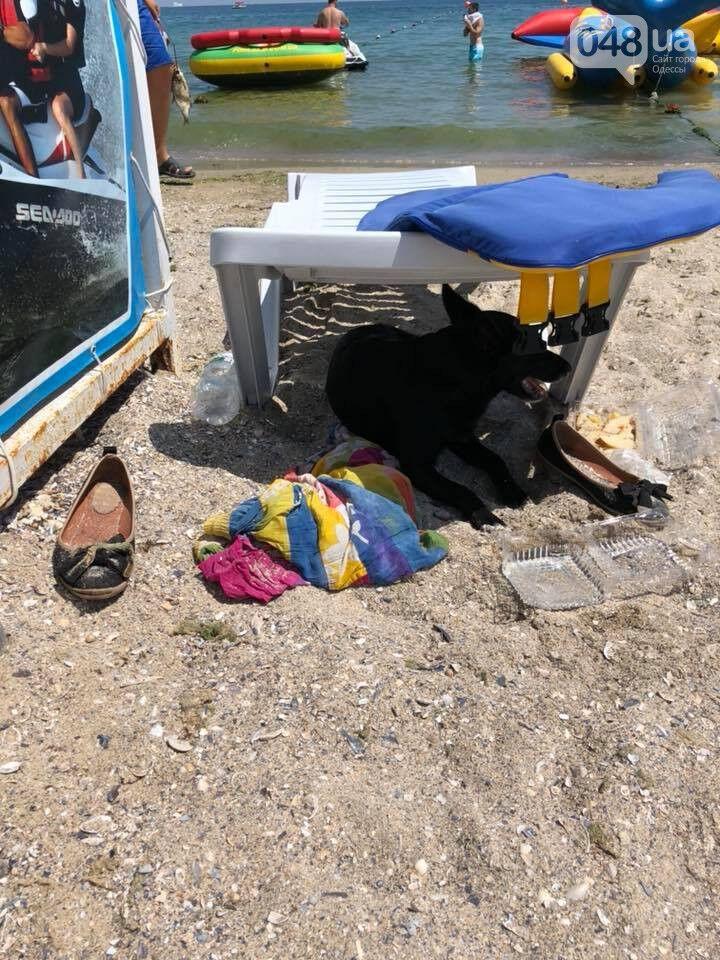 Одесский Хатико: собака весь день ждала свою погибшую хозяйку