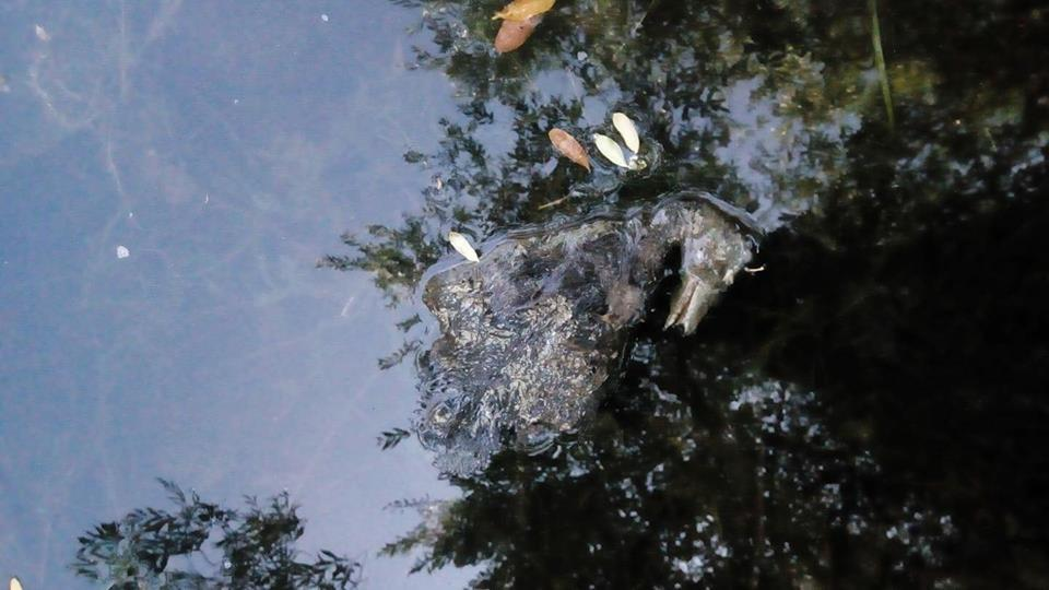"""Счет идет на сотни"": киевляне забили тревогу из-за массового мора птиц"