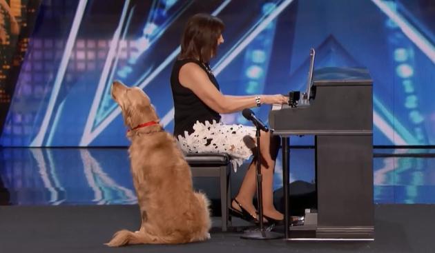 Собака заспівав пісню і став зіркою талант-шоу у США: відеофакт