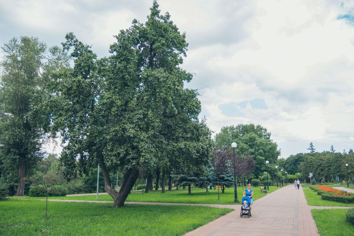 """Ремонт за 38 миллионов: как сейчас выглядит парк """"Отрадный"""" в Киеве"""