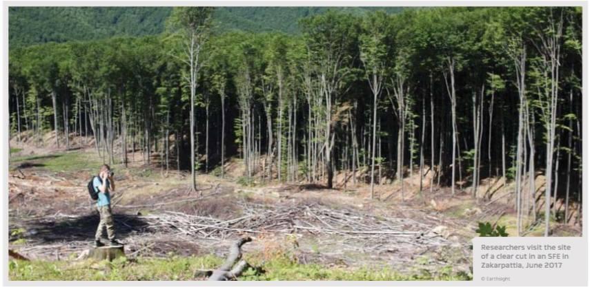 Последствия незаконной вырубки на Закарпатье