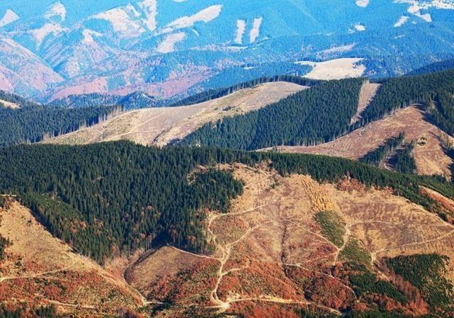 Масштабы вырубки леса в Украине