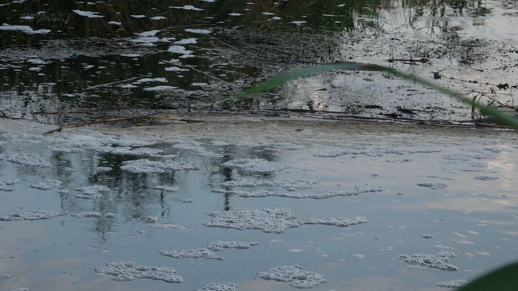 Вся река в мертвой рыбе: появились фото экологического бедствия в Украине