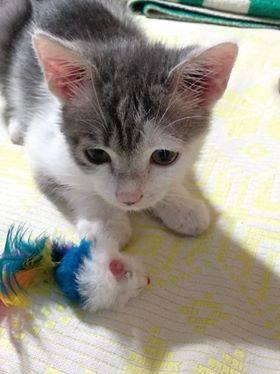Кіт Хлопчисько