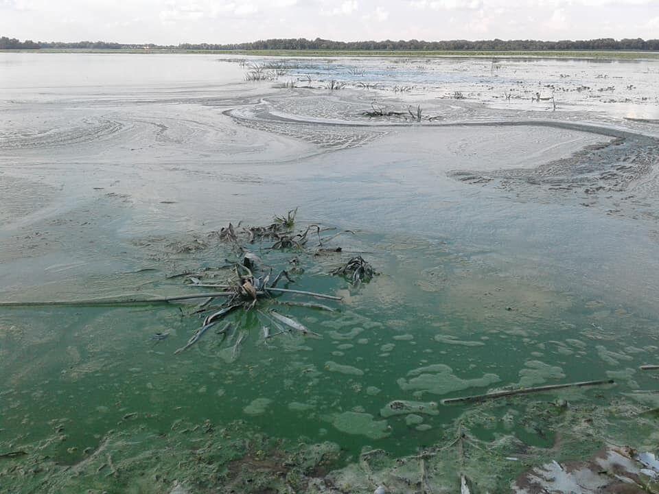 Онкологія та гепатит: екологи б'ють на сполох через катастрофу з Дніпром