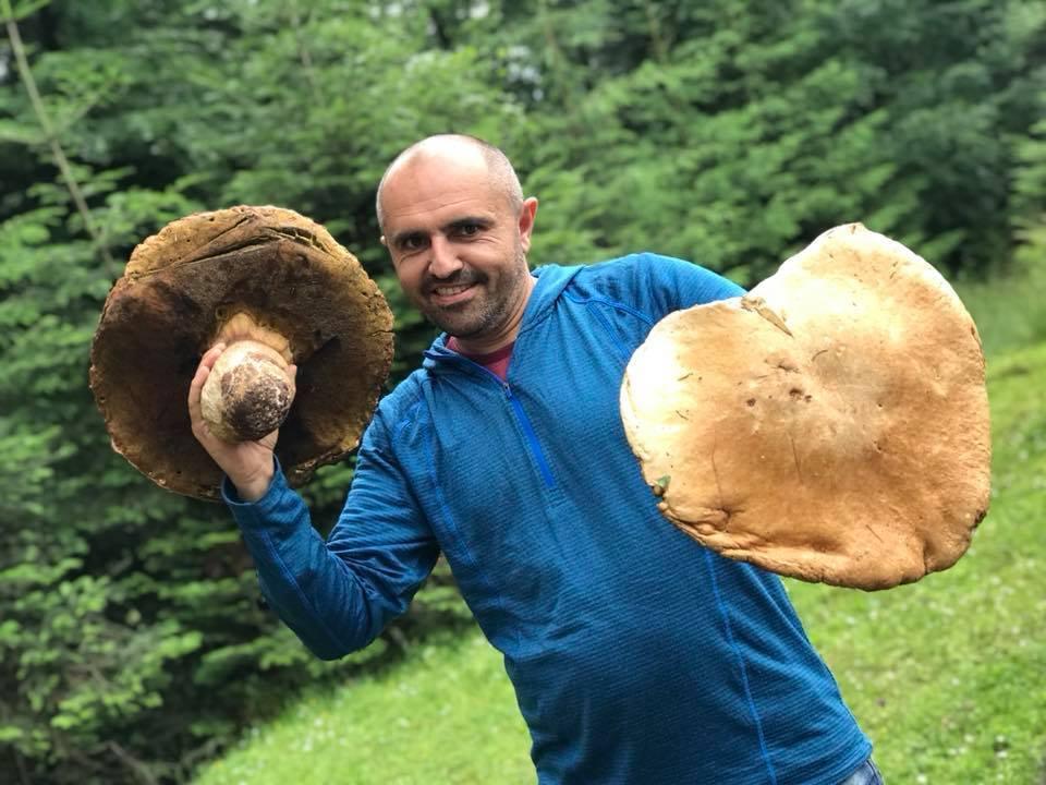 Размером с зонт: в Карпатах нашли огромные грибы