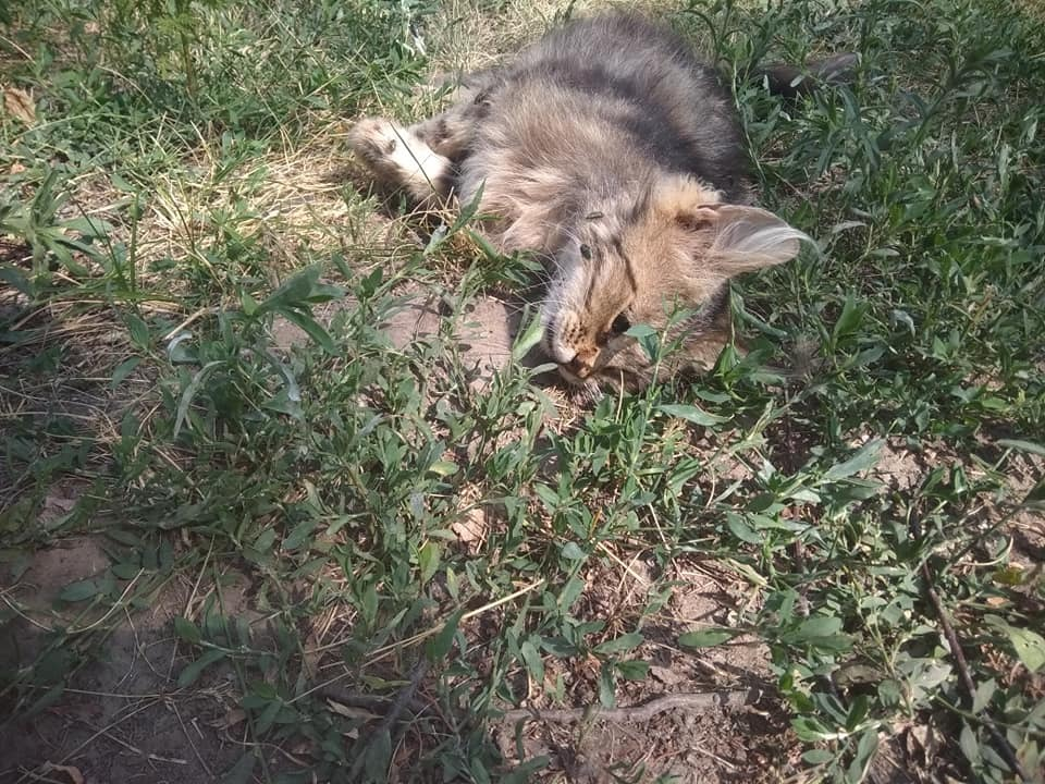 На глазах у детей жестоко убили кота киевлянки