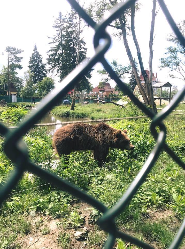 """""""Слезы наворачиваются"""": зоозащитник о приюте для медведей под Житомиром"""