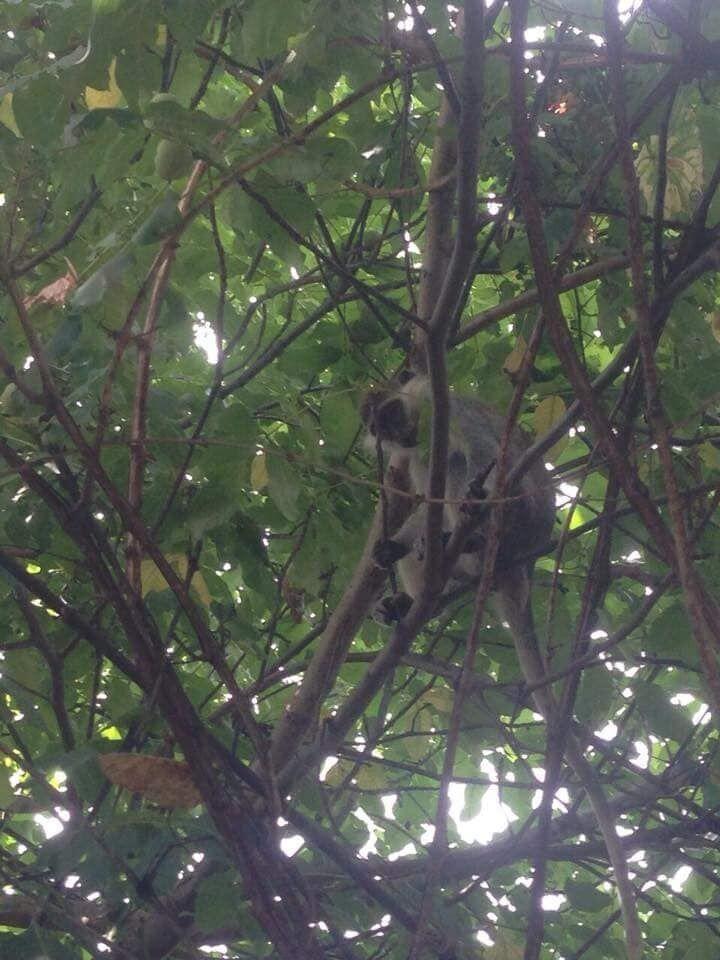 Под Одессой забили тревогу из-за стаи обезьян