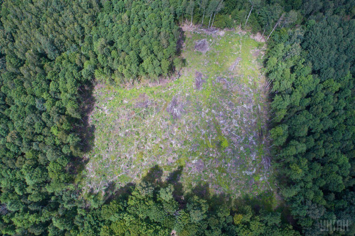 Вырубка леса в Украине