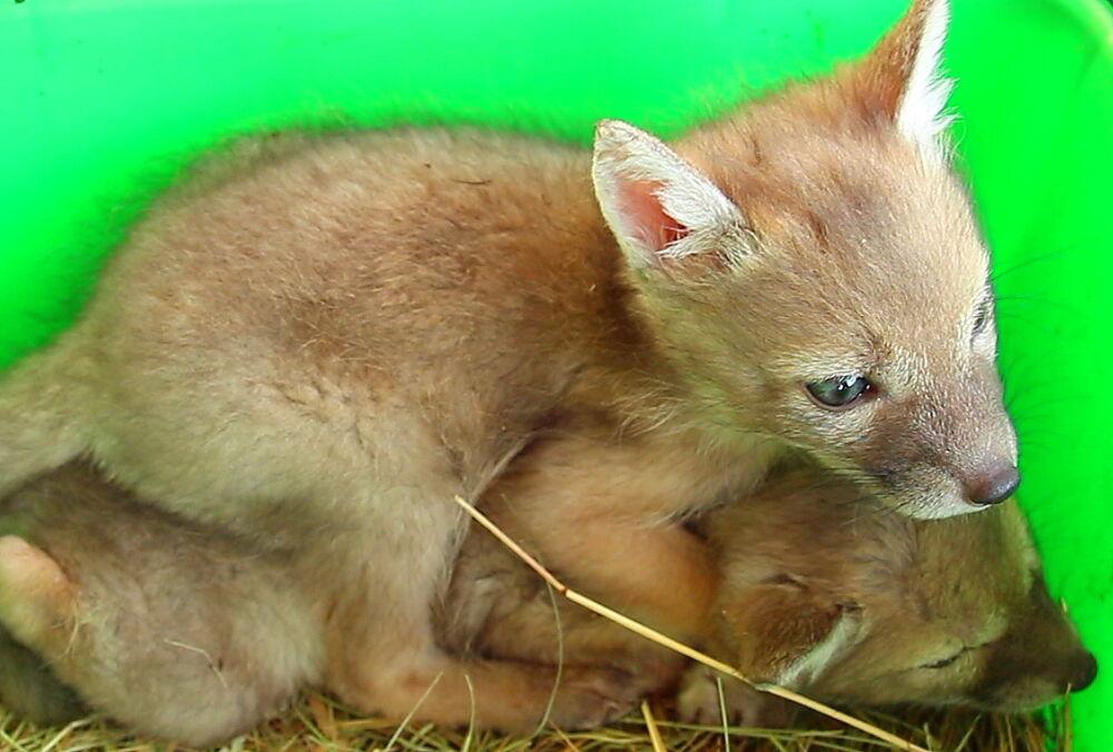 Зоопарк в Харкові похвалився рідкісним поповненням