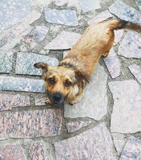 Друг в подарок: четыре собаки Днепра, которые ищут дом
