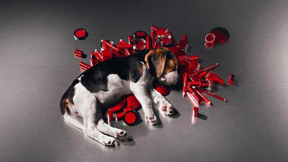 """""""Випалюють очі"""": зоозахисник про тестування косметики на тваринах"""
