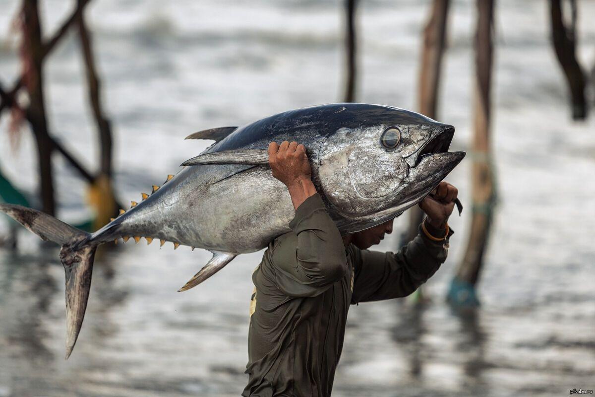 картинка рыба поймала рыбака потолки используются