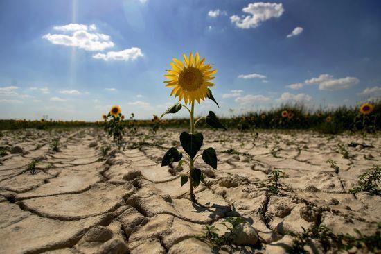 Климатический Армагеддон: когда глобальное потепление уничтожит Землю
